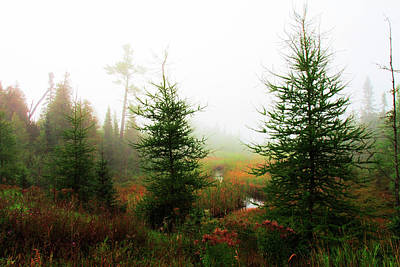 Photograph - Boreal Forest. Lake County, Mn by Cynthia Dickinson