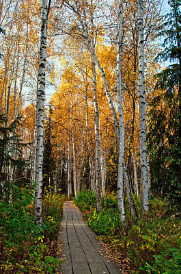 Photograph - Boreal Forest Trail In Fall 1 - Creamers Field by Cathy Mahnke