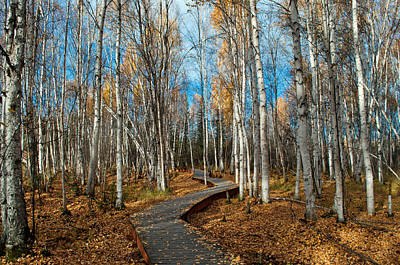 Photograph -  Boreal Forest Trail In Fall 3 - Creamers Field by Cathy Mahnke