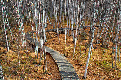 Photograph - Boreal Forest Trail In Fall 4 - Creamers Field by Cathy Mahnke