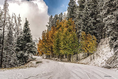 Photograph - Boreas Pass Road Aspen And Snow by Stephen Johnson