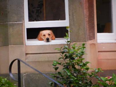 Photograph - Bored Dog by Nik Watt