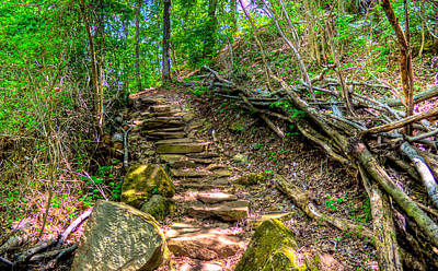 Photograph - Boreman Hill Trail by Jonny D