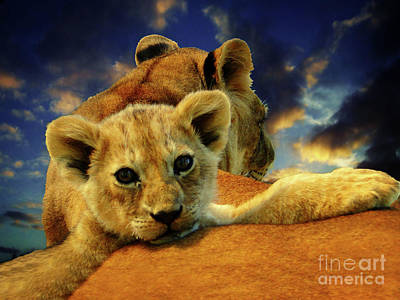 Photograph - Born Free IIi by Al Bourassa