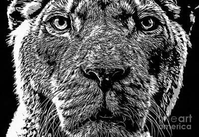 Novel Photograph - Born Free Lion by Edward Fielding