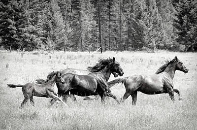 Photograph - Born Free To Run Bw by Athena Mckinzie