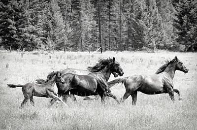 Photograph - Born Free To Run Bw by Athena Mckinzie