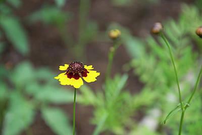 Photograph - Born To Be Wild Flower by Vanessa Valdes