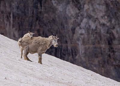 Photograph - Born To Climb by Kent Keller