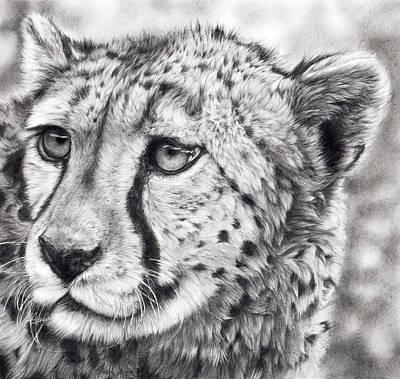 Cheetah Drawing - Born To Run by Peter Williams