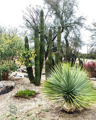 Photograph - Borrego Botanical Garden by Daniel Hebard
