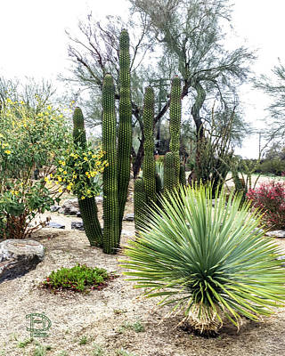 Borrego Botanical Garden Art Print