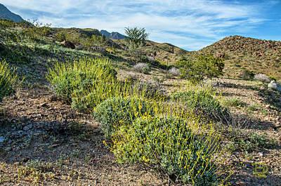 Photograph - Borrego Mountain Flora by Daniel Hebard