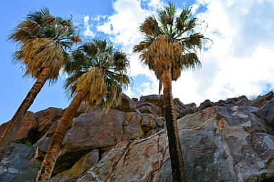 Photograph - Borrego Palm Canyon California by Kyle Hanson