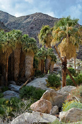 Photograph - Borrego Palm Canyon Portrait by Kyle Hanson