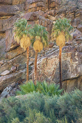 Photograph - Borrego Palm Canyon - Three Palms by Alexander Kunz