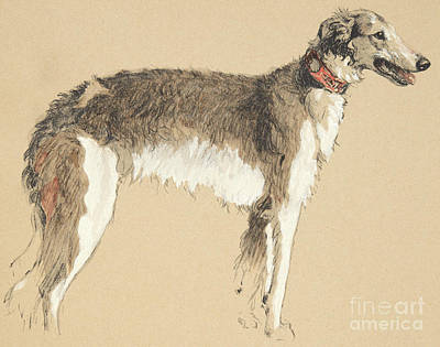 Best Friend Drawing - Borzoi, 1930 by Cecil Charles Windsor Aldin
