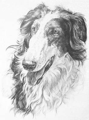 Drawing - Borzoi Hound by Barbara Keith