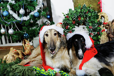 Art Print featuring the photograph Borzoi Puppies Wishing A Merry Christmas by Christian Lagereek