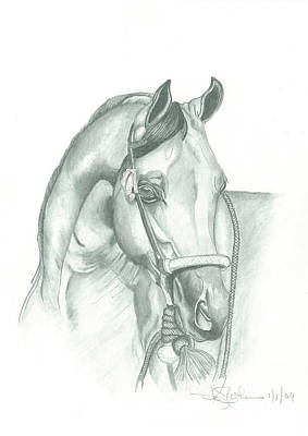 Drawing - Bosal Elegance by American Horse