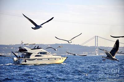 Photograph - Bosborus Seagulls by Andrew Dinh