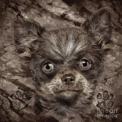 Puppies Mixed Media - Bosco by Shafawndi Heartski