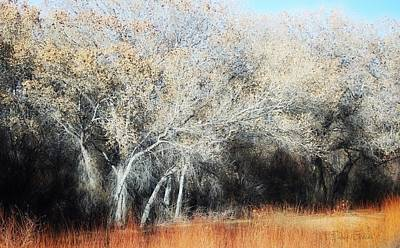 Mixed Media - Bosque Del Apache In January by Barbara Chichester