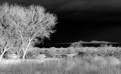 Photograph - Bosque Del Apache - Infrared by Britt Runyon