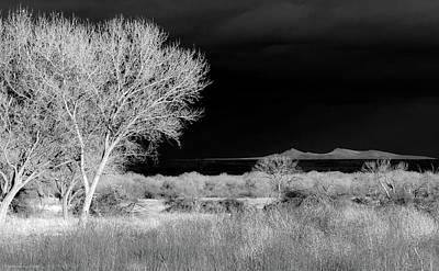 Bosque Del Apache - Infrared Art Print