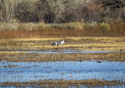 New Mexico Photograph - Bosque Del Apache - Sandhill Cranes by Julie Basile