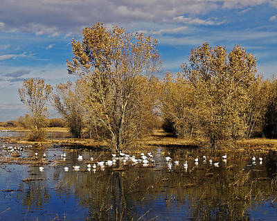 Bosque Del Apache Art Print by Kurt Van Wagner