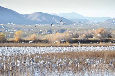 Photograph - Bosque Del Apache Snow Geese Landscape by Andrea Hazel Ihlefeld