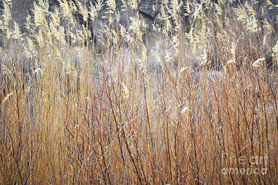 Art Print featuring the photograph Bosque Desert Willows by Andrea Hazel Ihlefeld