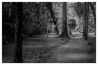 Bosque Do Silencio-campos Do Jordao-sp Art Print