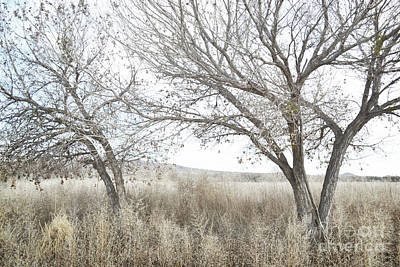 Art Print featuring the photograph Bosque Dreamy Tree Field by Andrea Hazel Ihlefeld