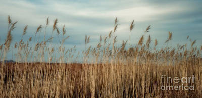 Photograph - Bosque Grasses by Susan Warren
