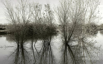 Photograph - Bosque Reflection by Susan Warren