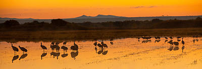 Bosque Sunrise Art Print by Alan Vance Ley