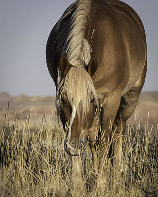 Photograph - Boss Mare by Elizabeth Eldridge