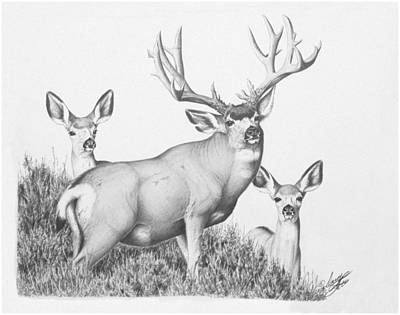 Drawing - Bostock Buck by Darcy Tate