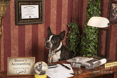 Boston Terrier Photograph - Boston Accountant by Eric Chegwin