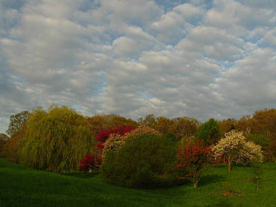 Photograph - Boston Arnold Arboretum by Juergen Roth