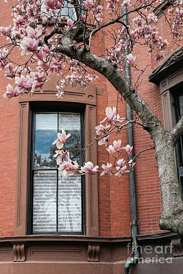 Buidling Photograph - Boston Back Bay Magnolias by Edward Fielding