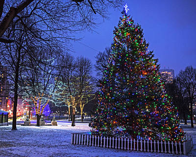 Photograph - Boston Common Christmas Tree 2017 by Toby McGuire