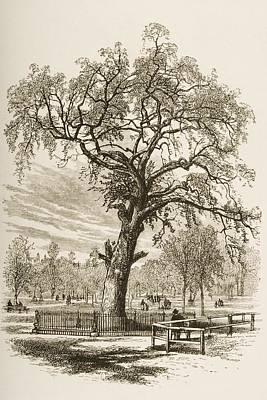 Liberty Place Drawing - Boston Massachusetts, The Liberty Tree by Vintage Design Pics