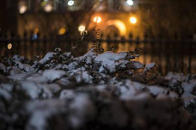 Photograph - Boston Public Garden Snow Storm Ma Massachusetts Bush by Toby McGuire