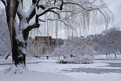 Photograph - Boston Public Garden Tree Covered In Snow Boston Ma by Toby McGuire