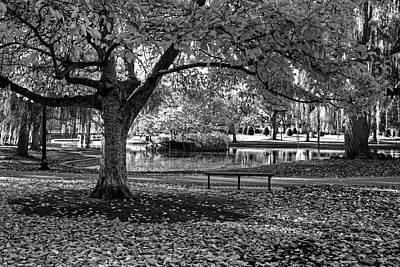 Photograph - Boston Public Garden Yellow Autumn Tree Boston Ma Black And White by Toby McGuire
