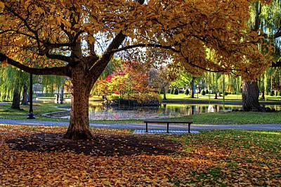 Photograph - Boston Public Garden Yellow Autumn Tree Boston Ma by Toby McGuire