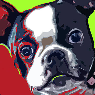Terrier Digital Art - Boston Pup by David G Paul